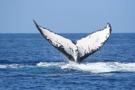 Whale Watching - Wildlife Package